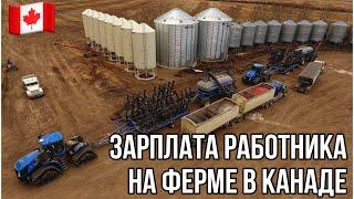 #41. Зарплата работника на ферме в Канаде. Канада глазами украинца. Реджайна, Саскачеван.