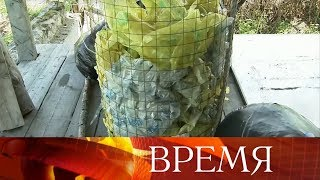 В Костромской области пенсионер придумал, что делать с мусором.