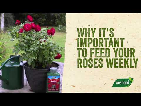 high performance plant feed Video