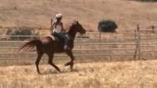 Calero Ranch Horse Camp - 2006