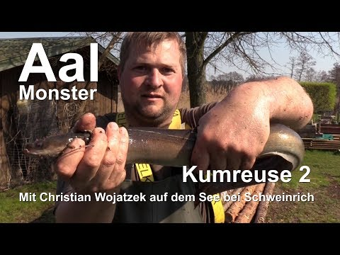 Kumreuse 2 - Aal ohne Ende im Dranser See (Wittstock-tv)