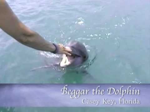 Beggar the Dolphin