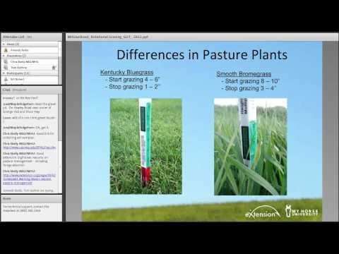 La composition des herbes des parasites dans lorganisme