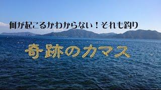 20161225奇跡のカマス大分県鶴見