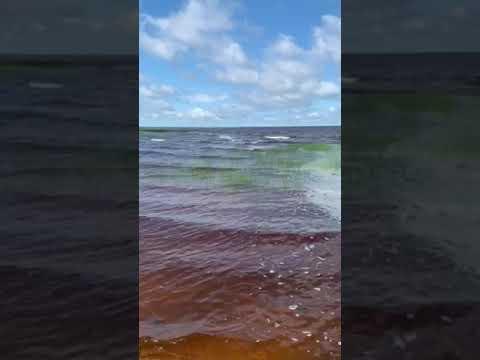 Video Of Big Bog, MN