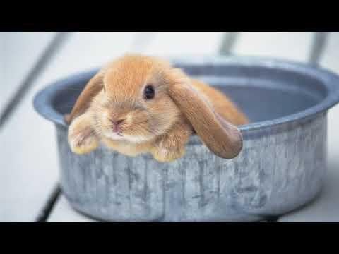 Какую траву нельзя давать кроликам в пищу?