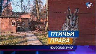 Кремлевский Соколиный двор ищет опекунов для своих подопечных