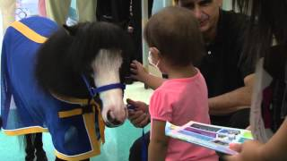Miniature Horse Spreads Magic At Kentucky Childrens Hospital
