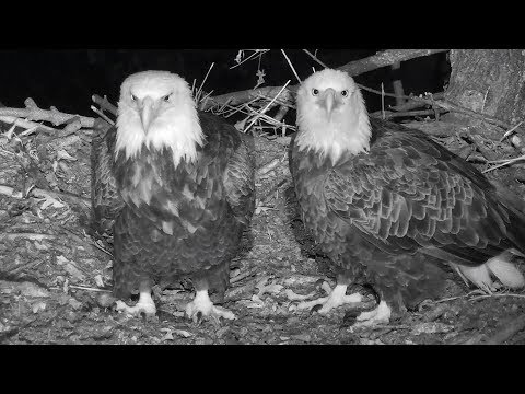 Docorah NN~Eagles stayed overnight at nest~2018/10/16