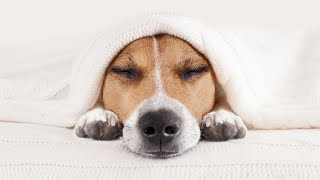 Deep Healing Music: Release Toxic Energy With These Cute Puppy Dogs