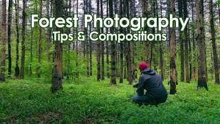 Forest Photography Tips On Finding Interesting Compositions