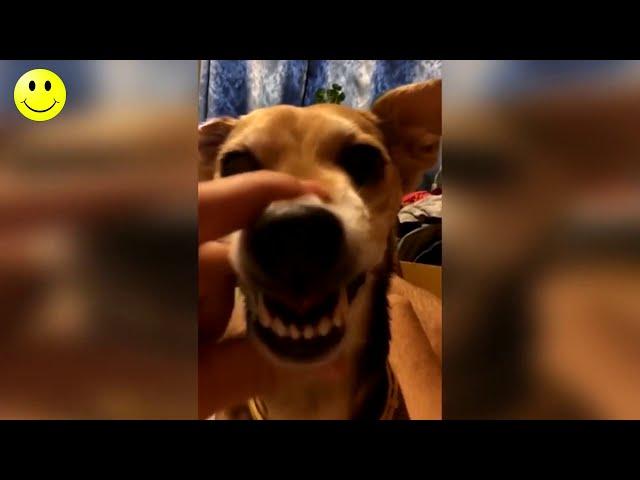 Smeh do Suza - Smešni Video Snimci - Smešno do Bola 2018 #7