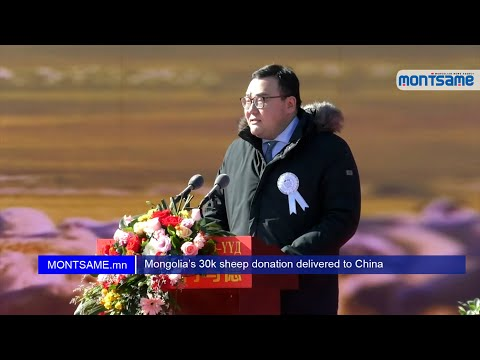 Mongolia's 30k sheep donation delivered to China