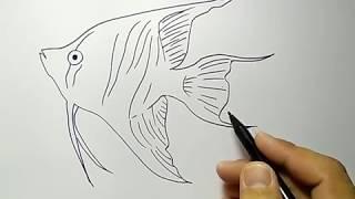 Aneka Mewarnai Gambar Ikan Mas