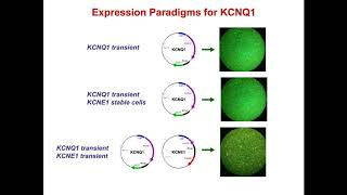 Accelerating Ion Channel Characterization and New Drug Candidate Identification
