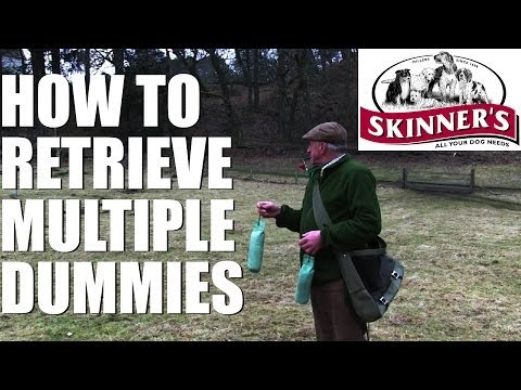Gundog training tips – Multiple dummies