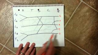 Brachial Plexus- How to draw it well in less than 20 seconds