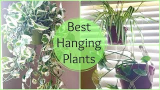 Best Hanging Plants For Indoor