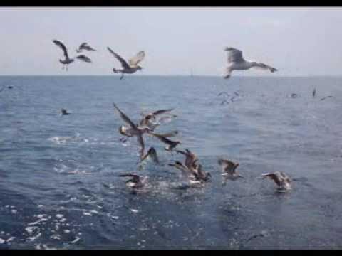 Zpětné zrcátko - Zpětné zrcátko: Oceán