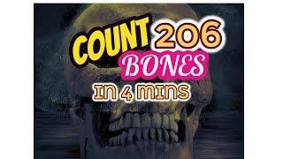 Count 206 Bones in Just 4 Minutes