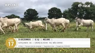 33 BEZERROS NELORE