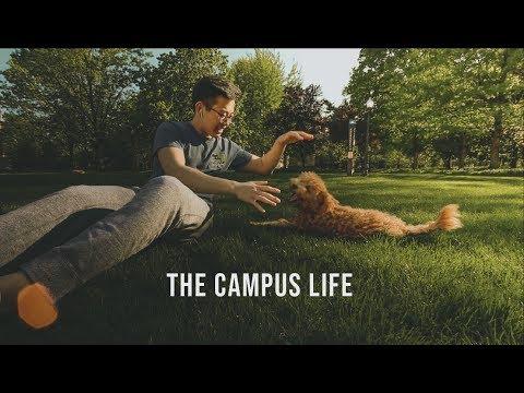 mp4 College Campus, download College Campus video klip College Campus