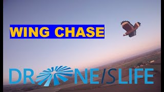 Wing Chase with Flozone FPV