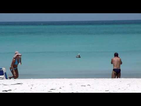 In video su pesca