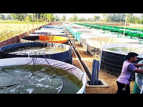 Biofloc Fish Farming Live - Fish Farming - Video - Free