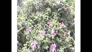 バイカル湖への旅2002年7月