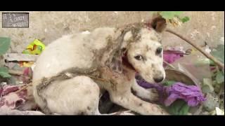 Тронуло до слез. Изуродована собака была спасена волонтерами. Спасение животных