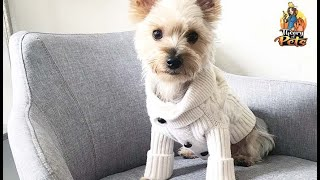 TOP #110: How To Find High Quality Dog Clothes