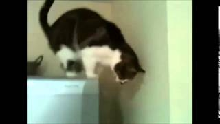 Mission impossible. Cat version
