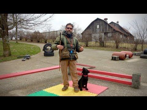 Labrador Retriever Puppy Training - 12 Weeks - YouTube