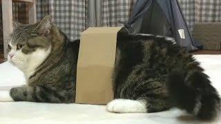 Смешные Приколы с Животными, смешные коты и прикольные собаки Калейдоскоп за 21 10 2018