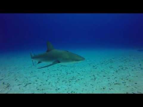 Reefie Fun - Split Coral Head, Eleuthera Islands, Blackbeard's Cruise 9/16/2015