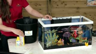 How to Maintain Your Fish Tank   Hayes Garden World