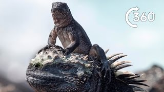 Iguana vs Snakes 360° | Planet Earth II | Behind the Scenes