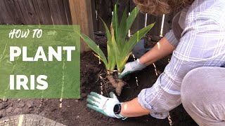 How To Plant Iris Correctly For Long Term Success