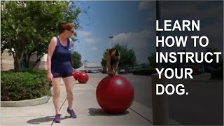 LEARN HOW TO INSTRUCT YOUR DOG