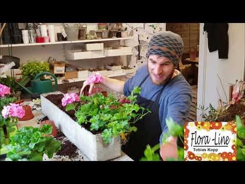 Balkonkasten bepflanzen - Geranien einpflanzen - Sommerdeko selber machen