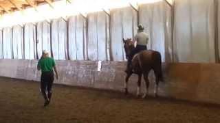 How To Teach A Horse Piaffe Part 8: Half Steps  Under Saddle Working Towards Piaffe