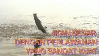 preview picture of video 'Mancing Pinggiran Muara. Strike Ikan BESAR'