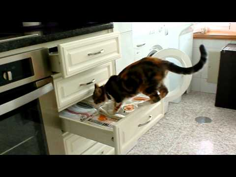 Amazing pets actions – Opening a drawer