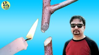 PLANT PRUNING TIPS | Types of Pruning and Right Time to Prune plants