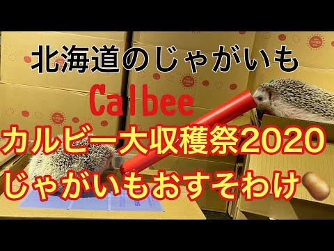 , title : 'カルビー大収穫祭のじゃがいも欲しい方いますか〜?