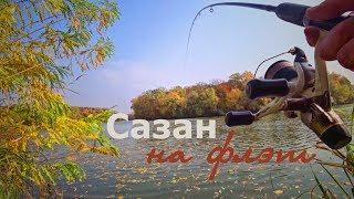 Ловля сазана поздней осенью на реке
