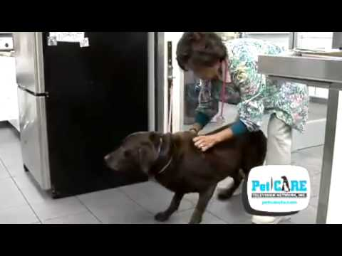Behandlung des Kniegelenks in Chelyabinsk