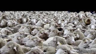 Zazie - Les Moutons 1995