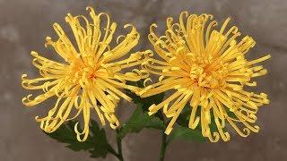 ABC TV  How To Make Mini Spider Chrysanthemum Paper Flower   Flower Die Cuts - Craft Tutorial